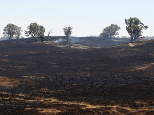 australian_fires_scorched_earth_N2