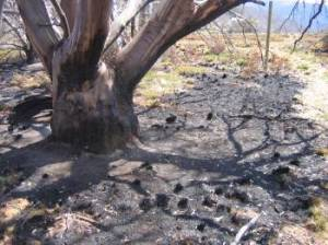 Bogong High Plains fires, 2007