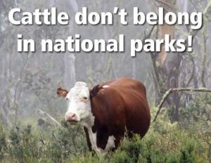 Cattle-dont-belong-in-national-parks-their-National-Parks