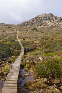 Mt Field national park, TAS
