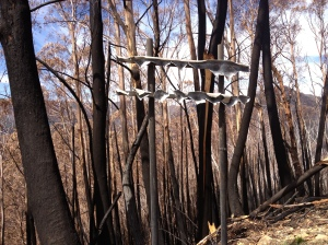 fire damage on Great Alpine Road
