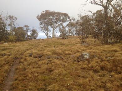 near Mt Tamboritha
