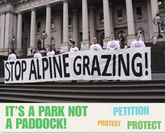 grazing banner