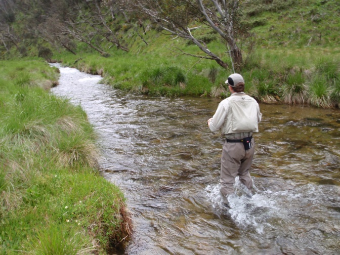 who – or what – is to blame for declining trout population?