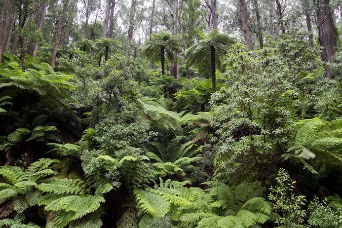 Kuark forest