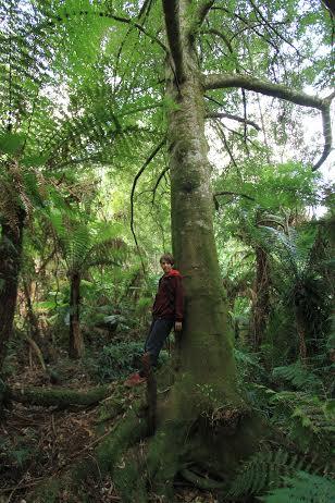 Kuark forest3