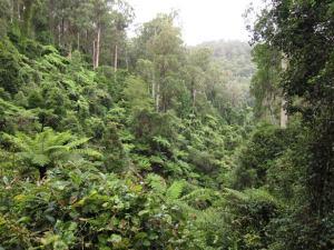 Kuark forest4