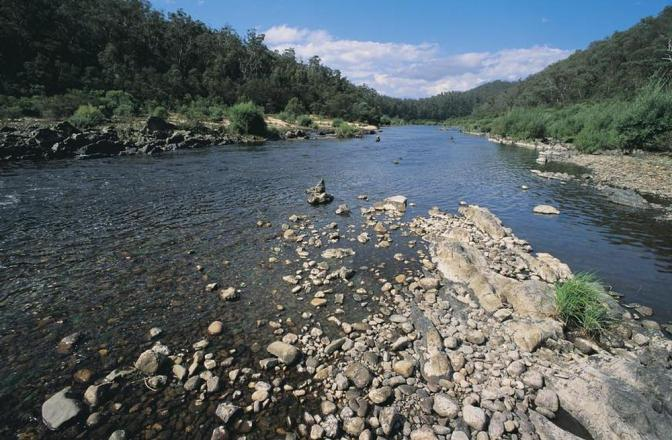 Feral cattle cull in Snowy River National Park