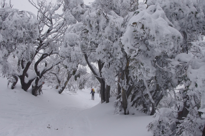 Mt Hotham backcountry skills course