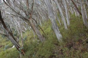 This is at the Buller end of the proposed road.
