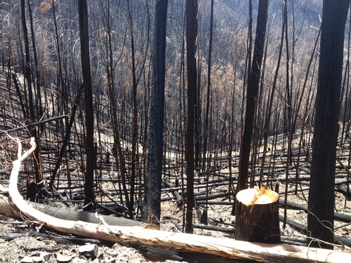 burnt ash on Hotham rd March 2013