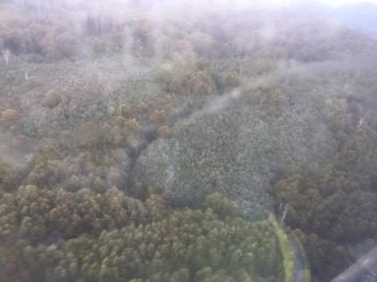 errinundra aerial